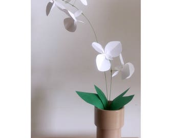 Artemis Phalaenopsis - butterfly orchid - vegetable Collection - paper Jungle - urban botanical