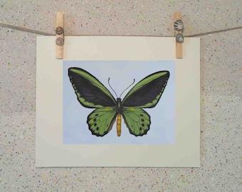 Butterfly, original oil painting fine art print on paper by Elena Parashko, botanical art print, green and black wings, wildlife art print