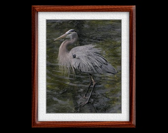 Great Blue Heron Print - 8x10 or 11x14 Great Blue Heron Photograph - Bird Photograph - Bird Print - Great Blue Print- Heron Art (P12)