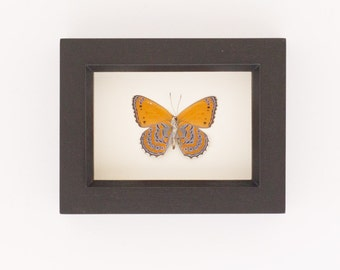 Real Framed Insect Meadow Wander Shadowbox Display