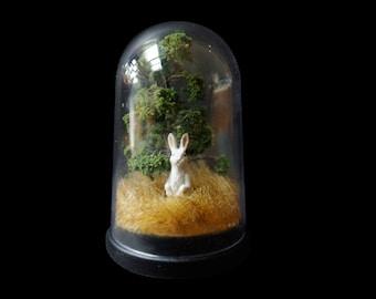 rabbit in the park