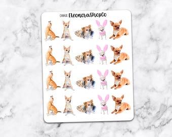 CHIHUAHUA Stickers — CHIHUI1
