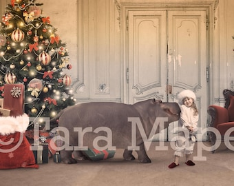 Hippopotamus For Christmas Digital Background