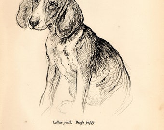 "1938 Vintage DOG PRINT from a book of Sketches by K.F. Barker ""Callow youth, the Beagle Puppy"""