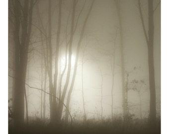Night Fog - Photo Print - Nature Photography (NP03)