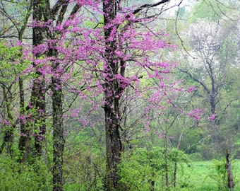 Scenic Photography 4x6 Springtime Vision Fine Art Woodland Nature Photograph