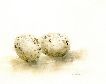 Watercolor of Two Arctic Tern Eggs 5 x 7 Original Painting