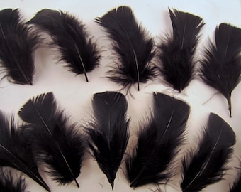 12 Black Turkey Flats Plumage, loose feathers craft feathers  boutonnieres hat feathers