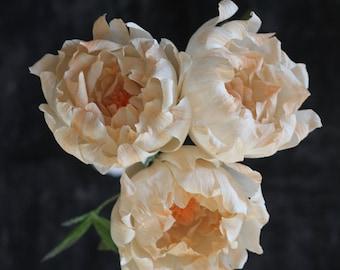 Paper Peony Bundle - Blush Peach Crepe Paper Flowers