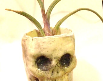 Handmade skull container, skull air plant holder, planter, housewarming, dorm room, succulent planter, pencil holder