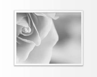 White rose wall art print Black and white flower poster Photography printable Digital Instant Download