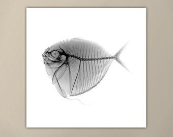 Black and White Fish X-Ray Print, Marine Life Art, Modern Art Print, Square Print, Moonfish, Minimalist Art Print, Custom Sizes Available