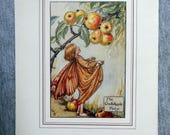 Crab-Apple Flower Fairy V...
