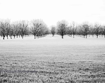 The Winter Orchard Fine Art Photography Black and White Landscape dramatic contrast bare trees minimal style empty field cold Large wall art