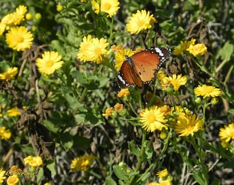 Butterfly standing for a moment