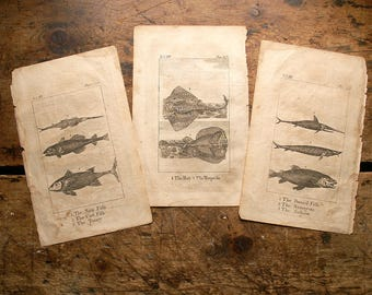 Antique Fish Botanical Prints - Sting Ray, Torpedo, Swordfish, Sturgeon, Salmon, Cod & Tunny - Book Pages from 1804