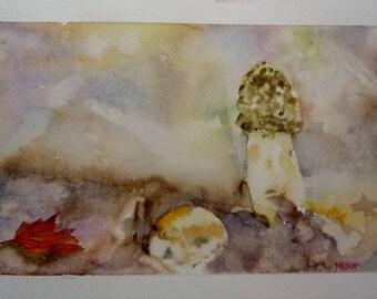 a Morel mushroom,