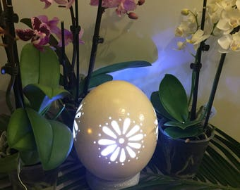 Real Daisy carved ostrich egg