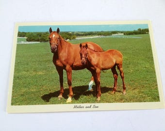 Mother and Son Horse Postcard, vintage photo post card, unused condition, FREE Shipping to CA and US