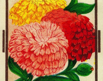 Zinnias - Vintage Seed Packet (Art Print - Multiple Sizes Available)