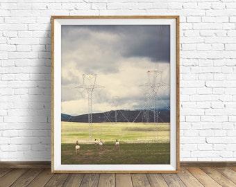 "wildlife, antelope, pronghorns, landscape photography, clouds, large art, large wall art, instant download printable art, art - ""Pronghorns"""