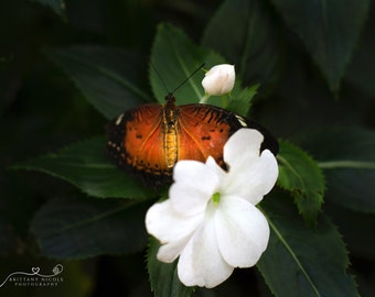 Flower Stock Photo, Stock Photography, Nature Photography, Stock Image, Digital Download Orange Butterfly Photography