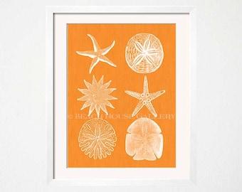 Orange Wall Art, Starfish Print, Sand Dollar Art Print, Seashell Wall Art, Beach House Art, Orange Wall Art, Kitchen, Orange Decor