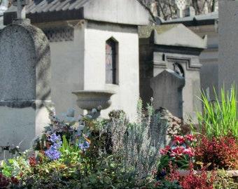 Europe, France, Paris, Travel Photography, Colour Print, Fine Art Print, Wall Art, Home Decor, Plants, Cimetière, Montparnasse Cemetery