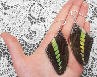 Real Butterfly Wings - Magical Jewelry - Iridescent Earrings - Butterfly Jewelry - Wing Earrings - Butterfly Costume - Opal Fire