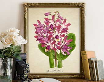 Botanical Print, Orchid Print, Flower Print, Purple Pink Orchid Giclee Home Decor, Orchid Art Print Decorative Orchid Art Reproduction FL141