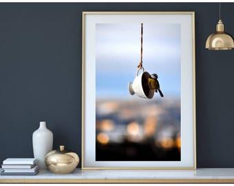 Photo. Bird Photography, Fine Art Photography, Wall Art, Modern Art, Nature Photography, Flying Bird, Nature Wall Art,