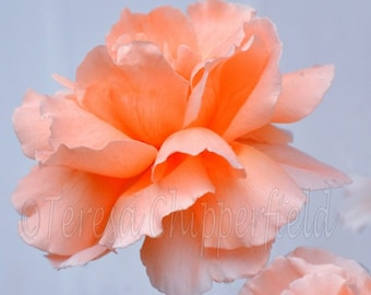 Vibrant Summer Peach Rose Print, Beautiful Peach Rose Flower Photo, Peaceful, Rose Garden Wall Art, Tranquil, Peach Home Decor, Floral Bokeh