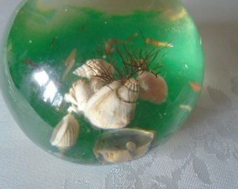 resin paperweight sea shells ,hermit crab.