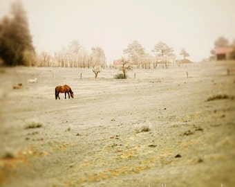 Horse photograph, fine art horse photography - 8x8 grazing horses photo, dreamy landscape, ranch pasture, nursery decor