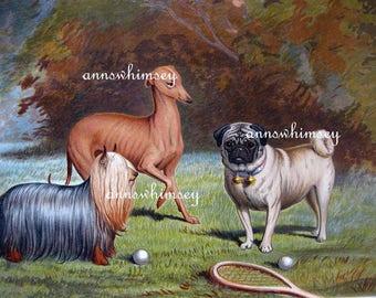 "Dog Art, Antique Restored Art ""Badminton Anyone""  #743"