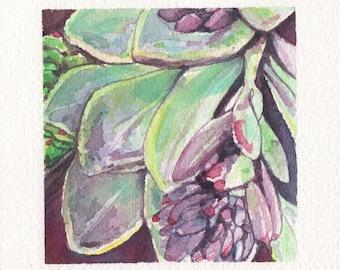 Mini Watercolor Painting Succulents - Lavender
