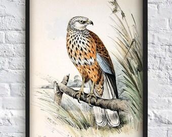 Vintage bird print bird illustration print animal print animal poster wall art print home decor 8x12 12x16