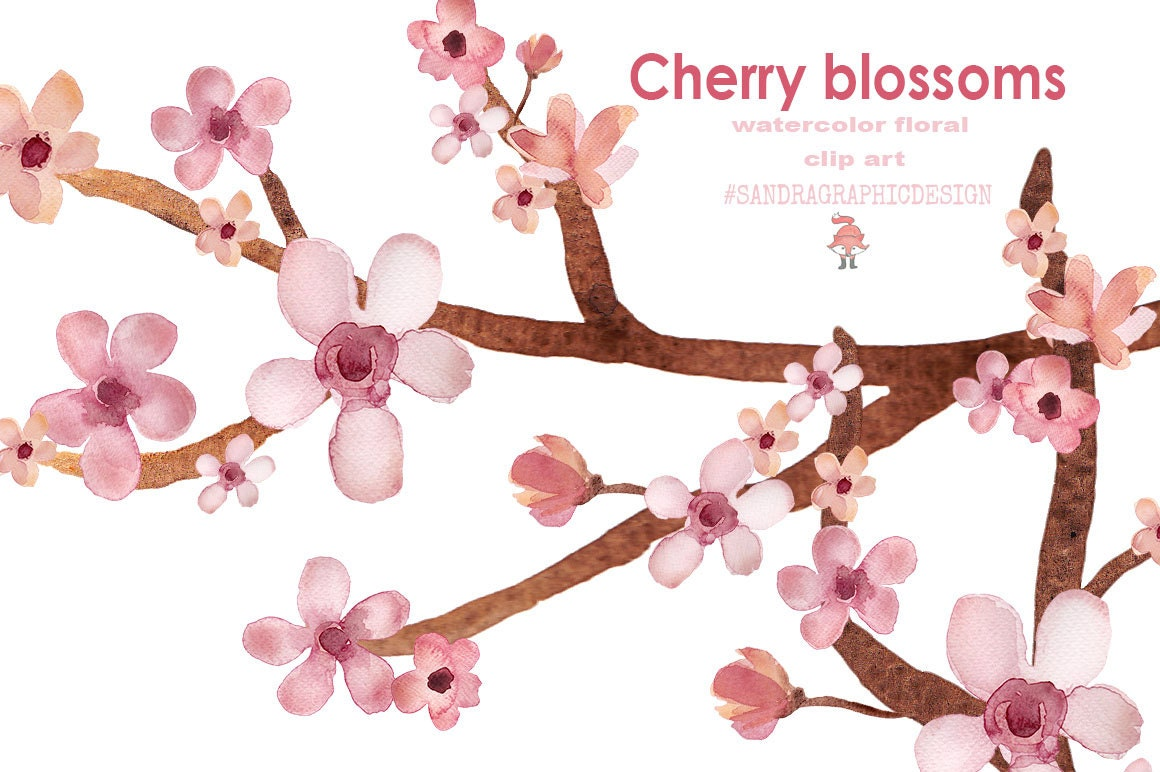 Cherry blossom clip art, hand painted watercolor floral clip art ...