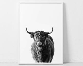 Highland Cow Print, Farm Animal Wall Art,  Black and White Cow Poster, Cattle Photography, Animal Portrait, Cow Closeup, Buffalo Print