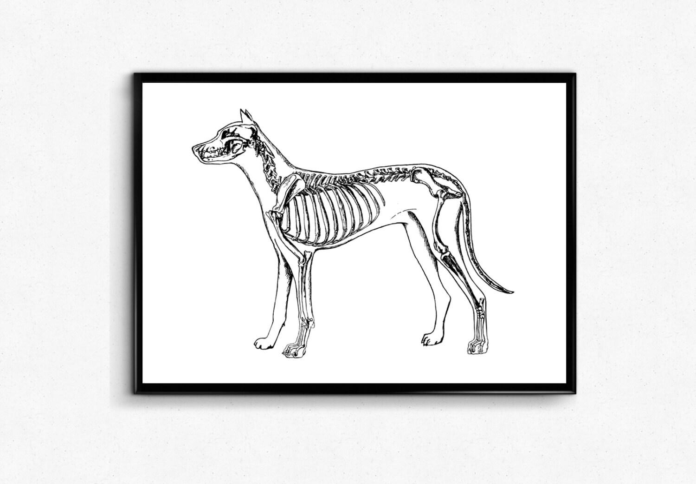 Nett Anatomie Der Hunde Galerie - Menschliche Anatomie Bilder ...