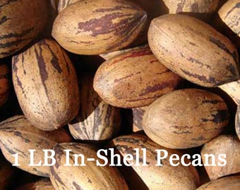 1 lb In-Shell Pecans