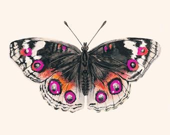 Butterfly Art Print - Butterfly Wall Art - Giclee Print - Pink & Orange Butterfly - Large Wall Art