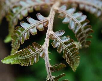 Fern Photography, Fern Print, Fern Art, Green Wall Decor, Abstract Leaf Photography, Fern Photograph, Botanical Art, Fern Leaf Photo