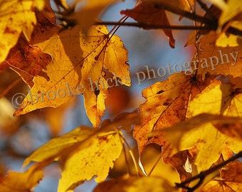 Fall tree - TN