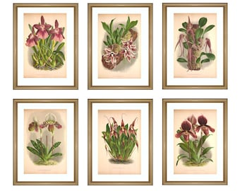 Purple Orchid Flowers Print - Wall Art Decor - Botanical Illustrations -Flowers Gallery Print - Flowers Poster - Orchid Collection -SET OF 6
