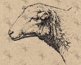Sheep picture Vintage image Instant Download Digital printable clipart graphic  scrapbooking, burlap, kraft, mail art, t-shirt etc HQ 300dpi