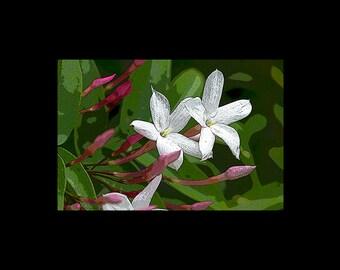 Gentle Jasmine