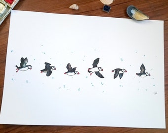 Puffins in flight - Print