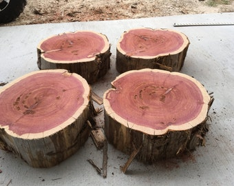 "Large Tree Stump, Aromatic Texas Red Cedar, cut to order,  16"" - 17"" diameter x 6"" tall, Texas Red Cedar, use for table, home wedding decor"