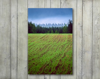 Meadow Wall Art,Forest Canvas Art Prints,Wall Decor,home decor,Photography Prints,Nature,Large Wall Art,Landscape,Photo Prints,Large Canvas